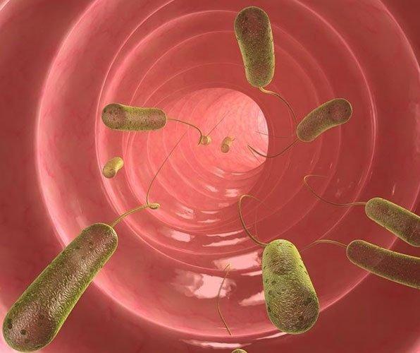 Бактерии Хеликобактер