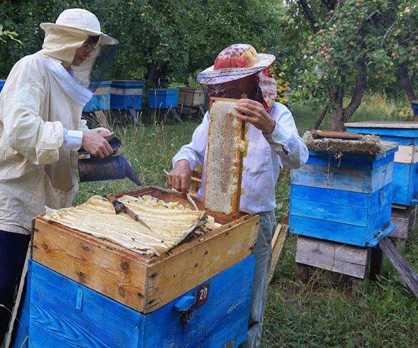 Полезен обычный мед с пасеки